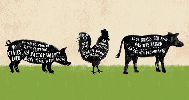 Animal welfare blog